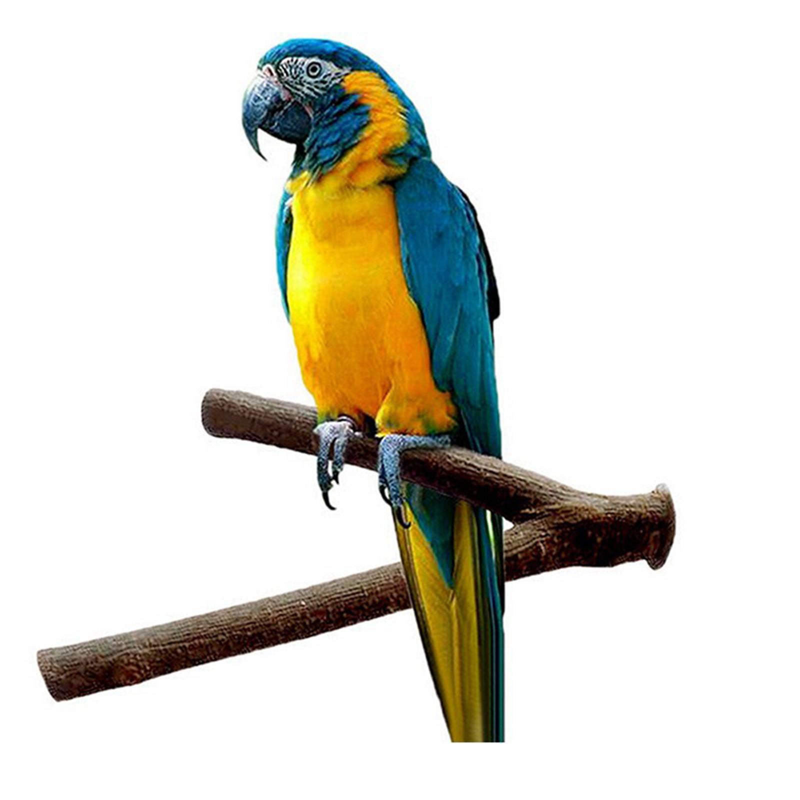 thumbnail 27 - Bird-Perch-Wood-Stand-Bird-Cage-Swing-Branch-for-Parrot-Parakeet-Cockatiel