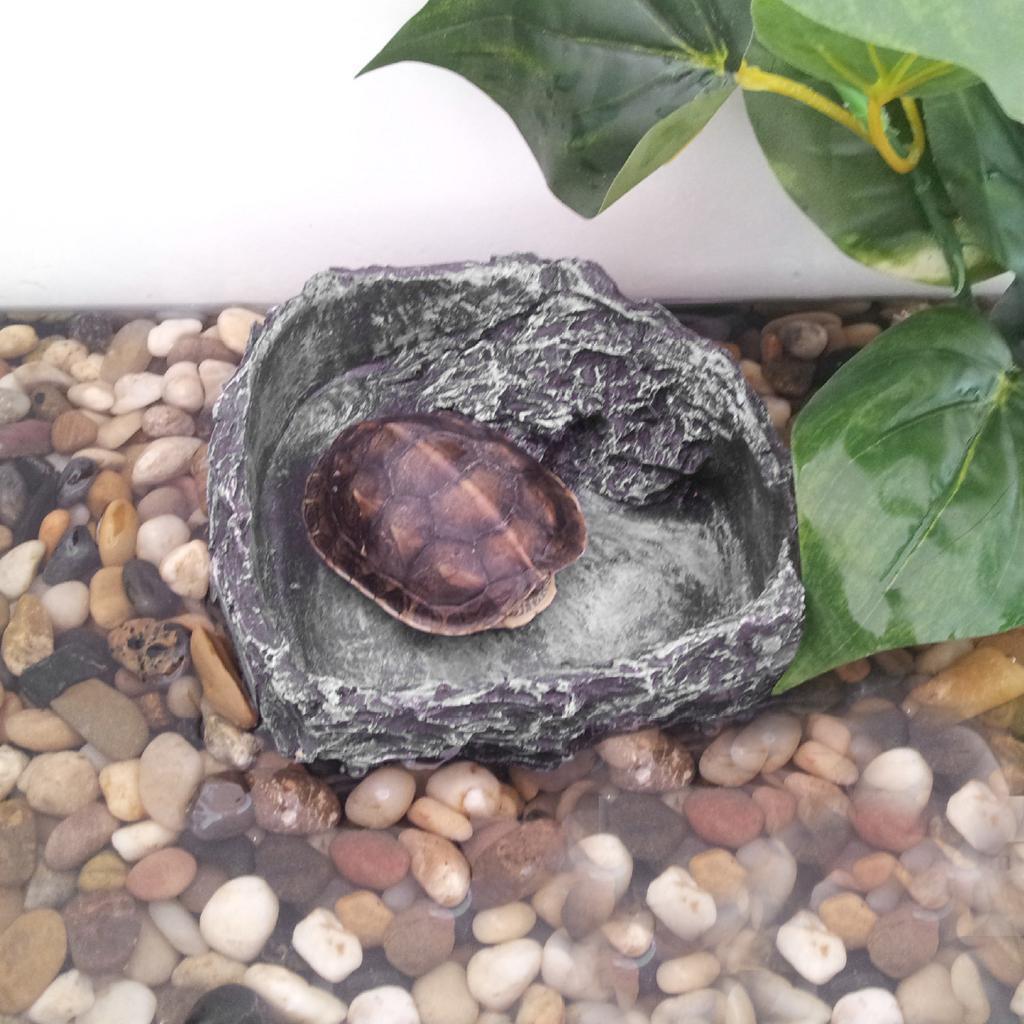 Pet-Rettile-Serpente-Tartaruga-Ragno-Ciotola-per-cibo-Piatto-per-acqua-Piatto miniatura 3