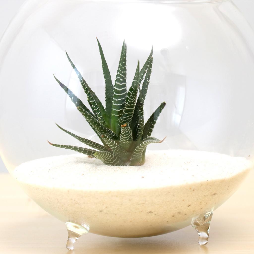 1 Pieces Tabletop Glass Flower Vase Terrarium Diy Ball Shaped Fish Tank Ebay
