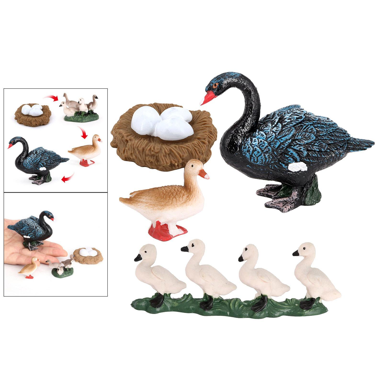 Animals Life Cycle Model Figures Set Swan Toy Science Toys Teaching Aids