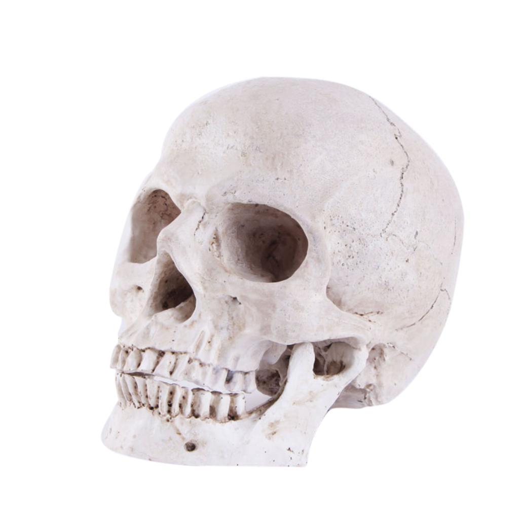 Resin Human Anatomy Skull Body Muscle Model Home Bar Art Decor ...